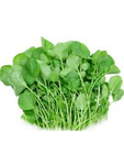 Peashoots Fresh Large Punnet